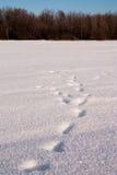 Spur im Schnee Lizenzfreie Stockfotos