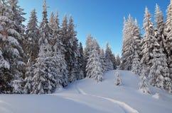 Spur im Schnee im Wald Stockbild