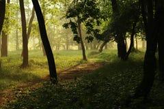 Spur im Sommerwald Stockbild