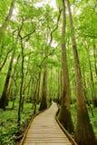 Spur im Wald lizenzfreies stockbild