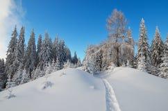 Spur im Wald Stockfotos