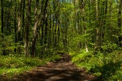 Spur im Wald Lizenzfreies Stockfoto