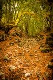 Spur im Wald im Herbst stockfotos