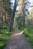 Spur im Wald nahe Meer in den Dünen Lizenzfreie Stockbilder