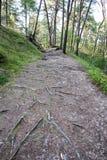Spur im Wald nahe Meer in den Dünen Stockfotos