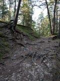 Spur im Wald nahe Meer in den Dünen Lizenzfreies Stockfoto