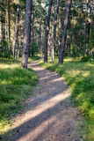 Spur im Wald nahe Meer in den Dünen Lizenzfreies Stockbild