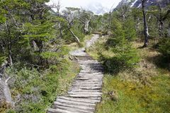 Spur nach Cerro Torre am Nationalpark Los Glaciares, Argentinien stockbild