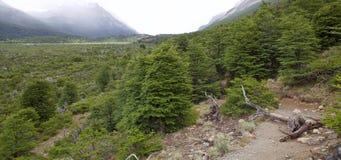 Spur nach Cerro Torre am Nationalpark Los Glaciares, Argentinien stockfotos