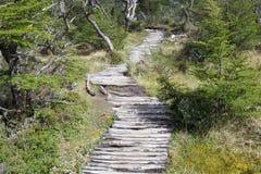 Spur nach Cerro Torre am Nationalpark Los Glaciares, Argentinien lizenzfreies stockfoto