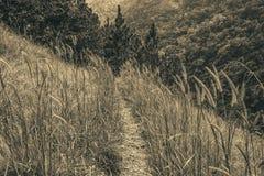 Spur unter Wald Lizenzfreies Stockfoto