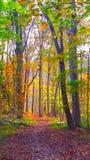 Spur von Farben Stockfotografie