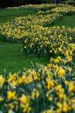 Spur von gelben Blumen lizenzfreies stockfoto