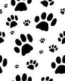 Spur von Katzen Lizenzfreies Stockbild
