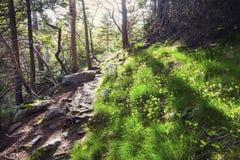 Spur, zu bellen Stier-Leuchtturm, Neufundland lizenzfreie stockbilder