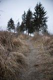 Spur zum Hügel stockfotografie