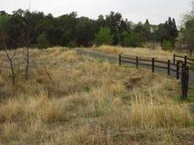 Spur zum Wald Lizenzfreies Stockfoto