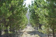 Spur zwischen den Bäumen, die zu Schönheit führen lizenzfreie stockfotos