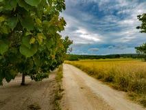 Spur zwischen Obstbäumen stockbilder