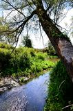 Spurce, Forest, Parks Stock Image
