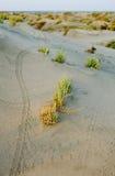 Spuren auf dem Sand Lizenzfreies Stockbild