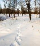 Spuren auf Schnee Lizenzfreie Stockfotos