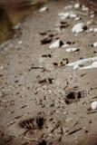 Spuren des Mannes ein Strand Lizenzfreie Stockbilder