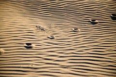 Spuren des Tieres auf dem Sand in der Wüste Lizenzfreie Stockfotografie