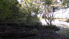 Spuren des Tsunamis bei Khao Lak stock video footage