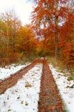 Spuren des Winters Lizenzfreie Stockbilder