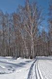 Spuren in einer Birkenwaldung nahe der Stadt Kamensk-Uralsky Russland Stockfotografie