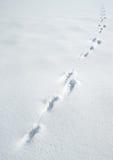 Spuren eines Hasen auf einem Schnee Lizenzfreies Stockbild