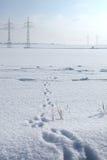 Spuren eines Hasen auf einem Schnee Lizenzfreies Stockfoto