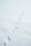 Spuren eines Hasen auf einem Schnee Stockbild