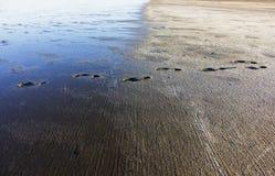 Spuren eines Mannes im nassen Boden in der untergehenden Sonne stockfotografie