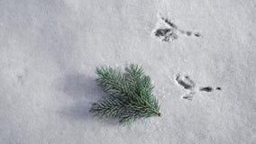 Spuren eines Vogels auf dem frischen Schnee stockfotografie