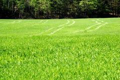 Spuren im grünen Gras stockbild