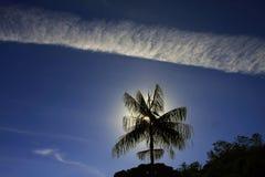 Spuren im Himmel, der den einzigen Kokosnussbaum gestaltet lizenzfreie stockfotografie
