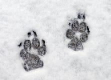 Spuren im Schnee Stockbild