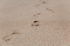 Spuren von bloßen Füßen auf nassem Meersand Lizenzfreie Stockfotos