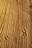 Spuren von Hunden und von Autos auf dem Sand Stockfoto