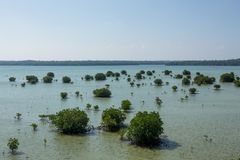 Spurhaltung der Mangrove Karimun Jawa lizenzfreies stockfoto