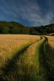 Spurweiten, die durch ein Weizen-Feld laufen Stockfotos