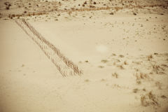 Sputo di Curonian del parco nazionale Fotografia Stock Libera da Diritti