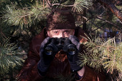 Spy. Looking in binoculars from pine branch Stock Photography