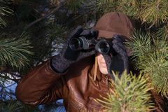 Spy. Looking in binoculars from pine branch Royalty Free Stock Photography