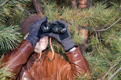 Spy. Looking in binoculars from pine branch Royalty Free Stock Image