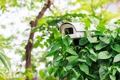 Spy Camera in the Shrub, Closeup Royalty Free Stock Photography