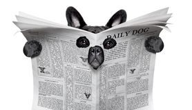 Spy dog reading a newspaper Stock Photo