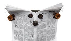 Spy dog reading a newspaper Stock Photos